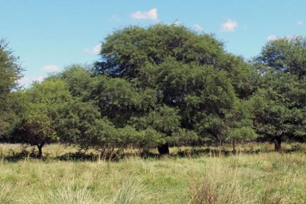 bosque 696x392