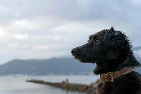 Resultado de imagen para Comando, el perro del ARA San Juan