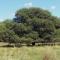 Asignan $ 30 millones al aprovechamiento sustentable de bosques nativos