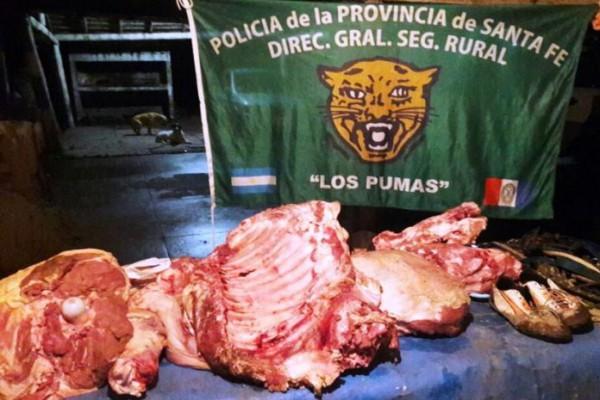 pumas carne 696x479