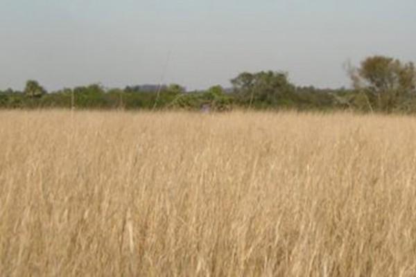 Monitorean seis millones de hectáreas con un sistema para estimar la producción de materia seca