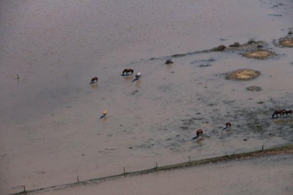 El ministro de la Producción santafesino anunció que la mitad del territorio productivo se encuentra bajo agua.